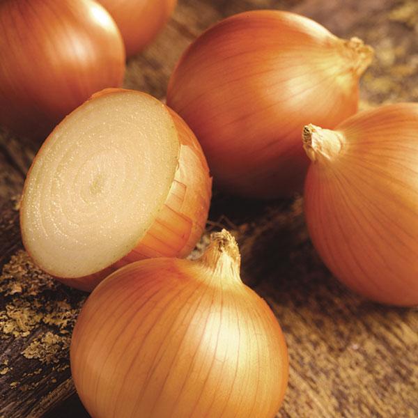 Onion-Milestone-cut