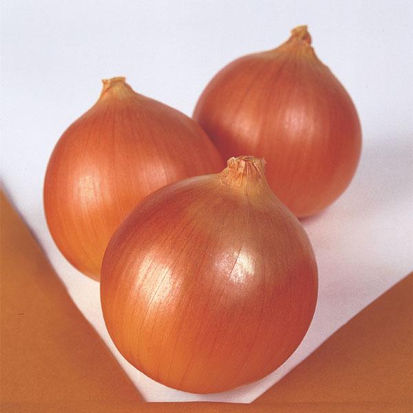 Onion-Norstar