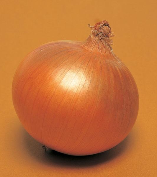 Onion-T-420