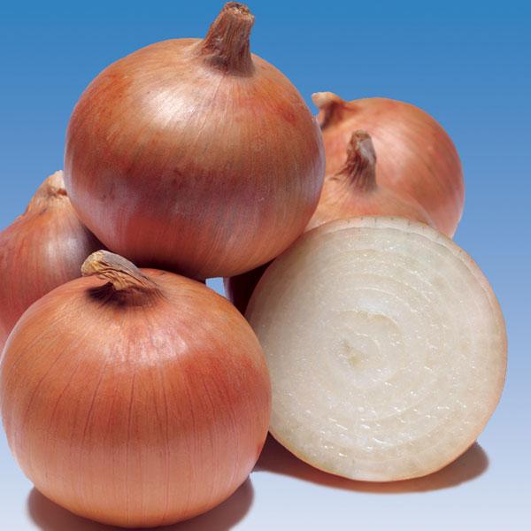 Onion-Trailblazer