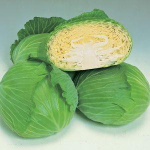 Cabbage-GREEN-LUNAR