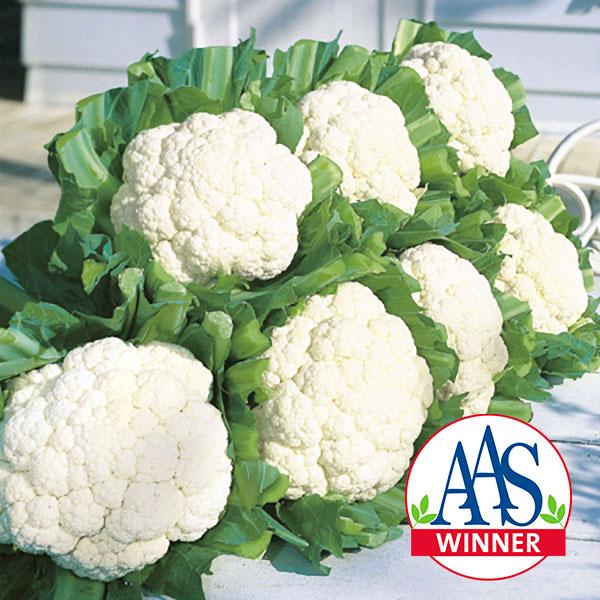 Cauliflower-Snow-Crown