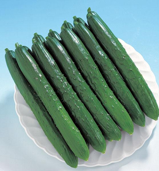 Cucumber-F1-TAURUS