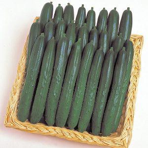 Cucumber-Soarer
