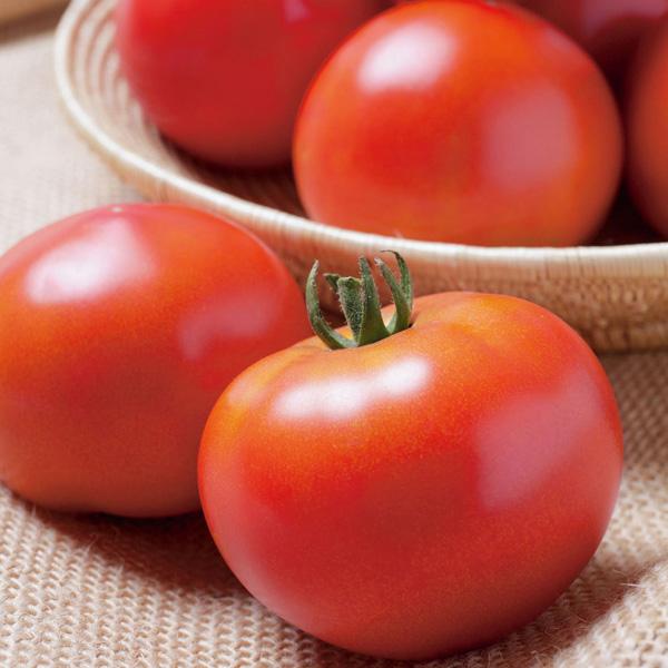 Tomato-KATANA