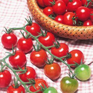 Tomato-Rica