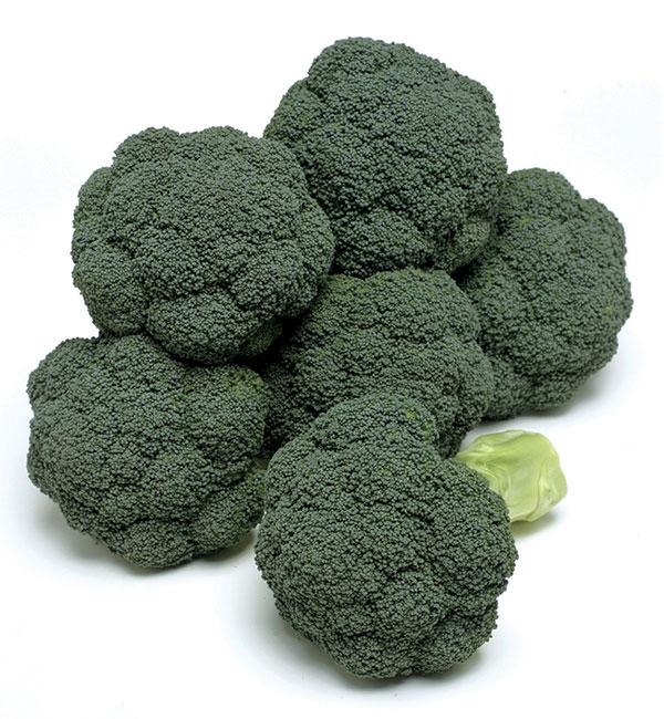 Broccoli-PARAISO