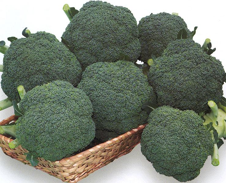 Broccoli-Thunder-Dome