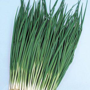 Bunching-Onion-Gallop