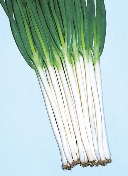 Bunching-Onion-Kiyotaki-White-Long