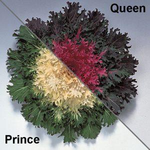 Flower-Kale-Coral-Series