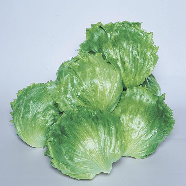 Lettuce-LEGACY