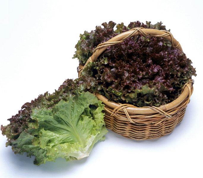 Lettuce-Magma-Red-basket