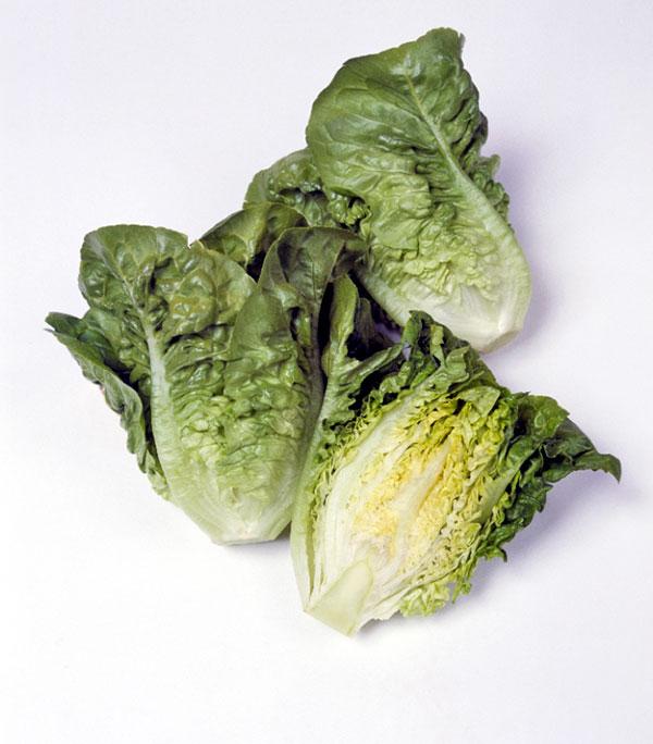 Lettuce-Manoa