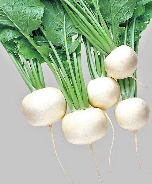 Turnip-Oasis
