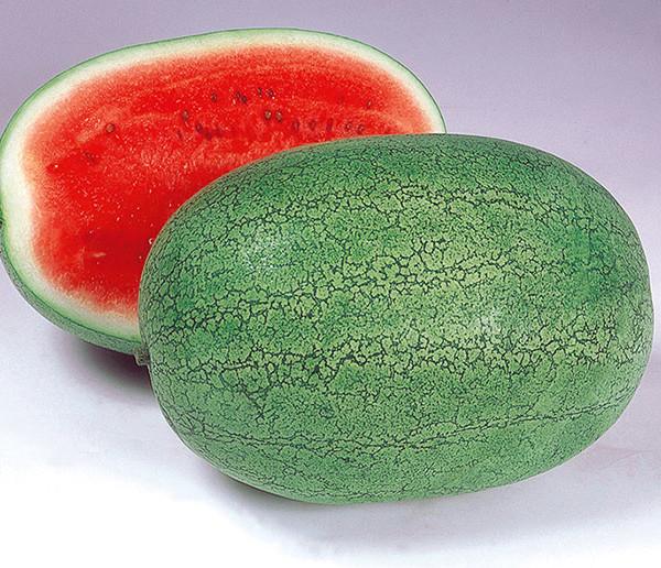 Watermelon-Glory-Jumbo