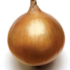 Onion T-448