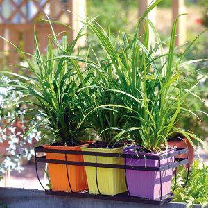 Carex-fresh-look