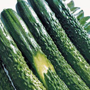 Cucumber-Zipangu