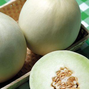 Melon-Valley-Dew