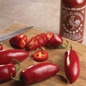 jalapeno-pepper-j-7-red-vert