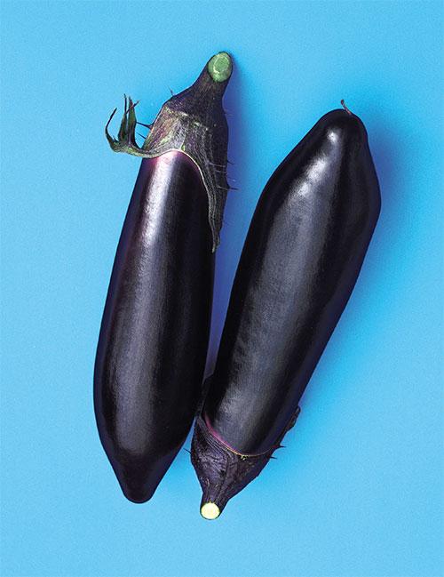 Eggplant-Black-Stream